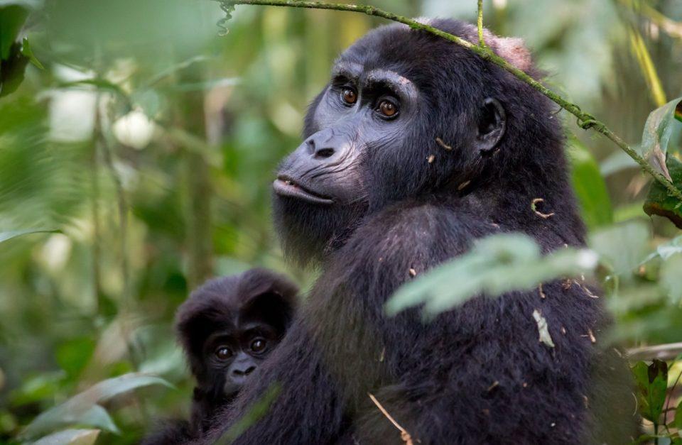 4 Days Rwanda Gorilla Adventures