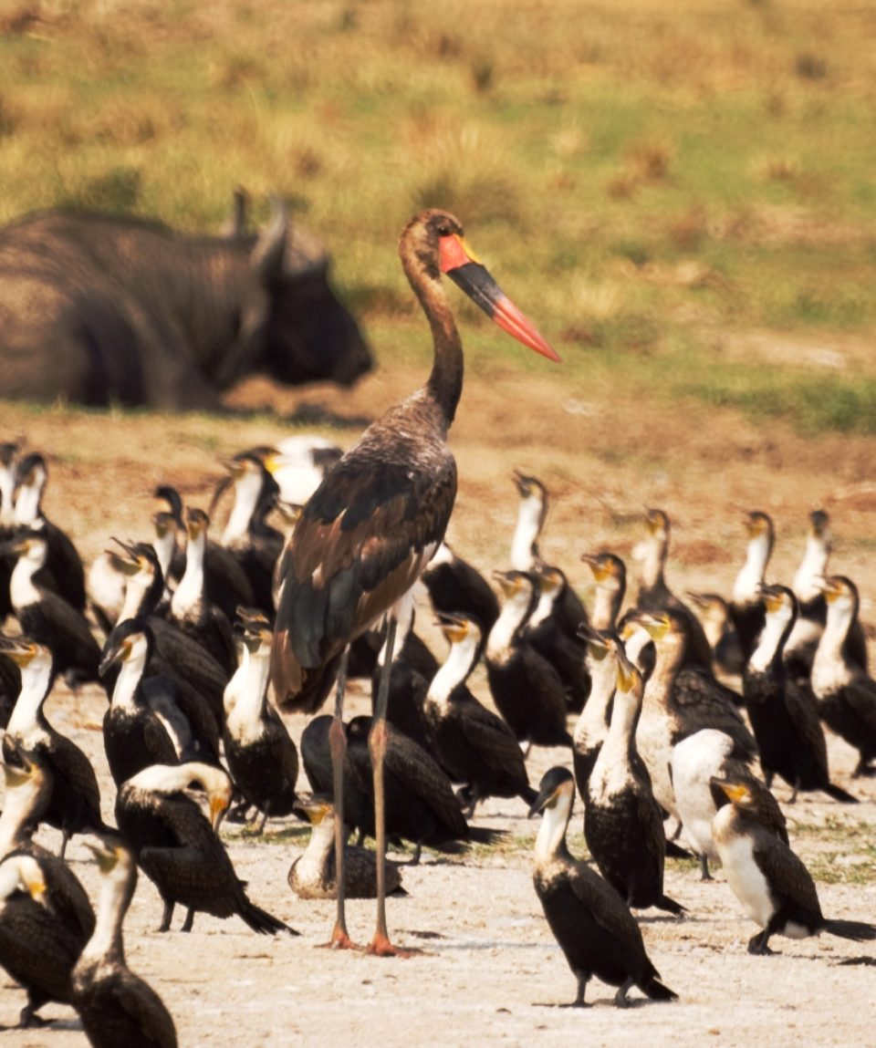 15 Days Tour Uganda, Birding In Bwindi, Queen Elizabeth